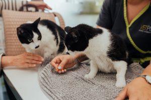 Desparasitação de gatos numa consulta da clinica veterinaria vetpoint