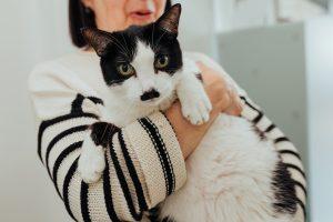 consulta de um gato na clinica veterinaria vetpoint