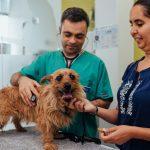 consulta veterinária exame a cão