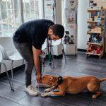 Alimentação veterinário de cães