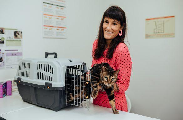 consulta veterinaria com gato