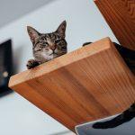 artigo sobre vacinas para gatos da clínica vetpoint