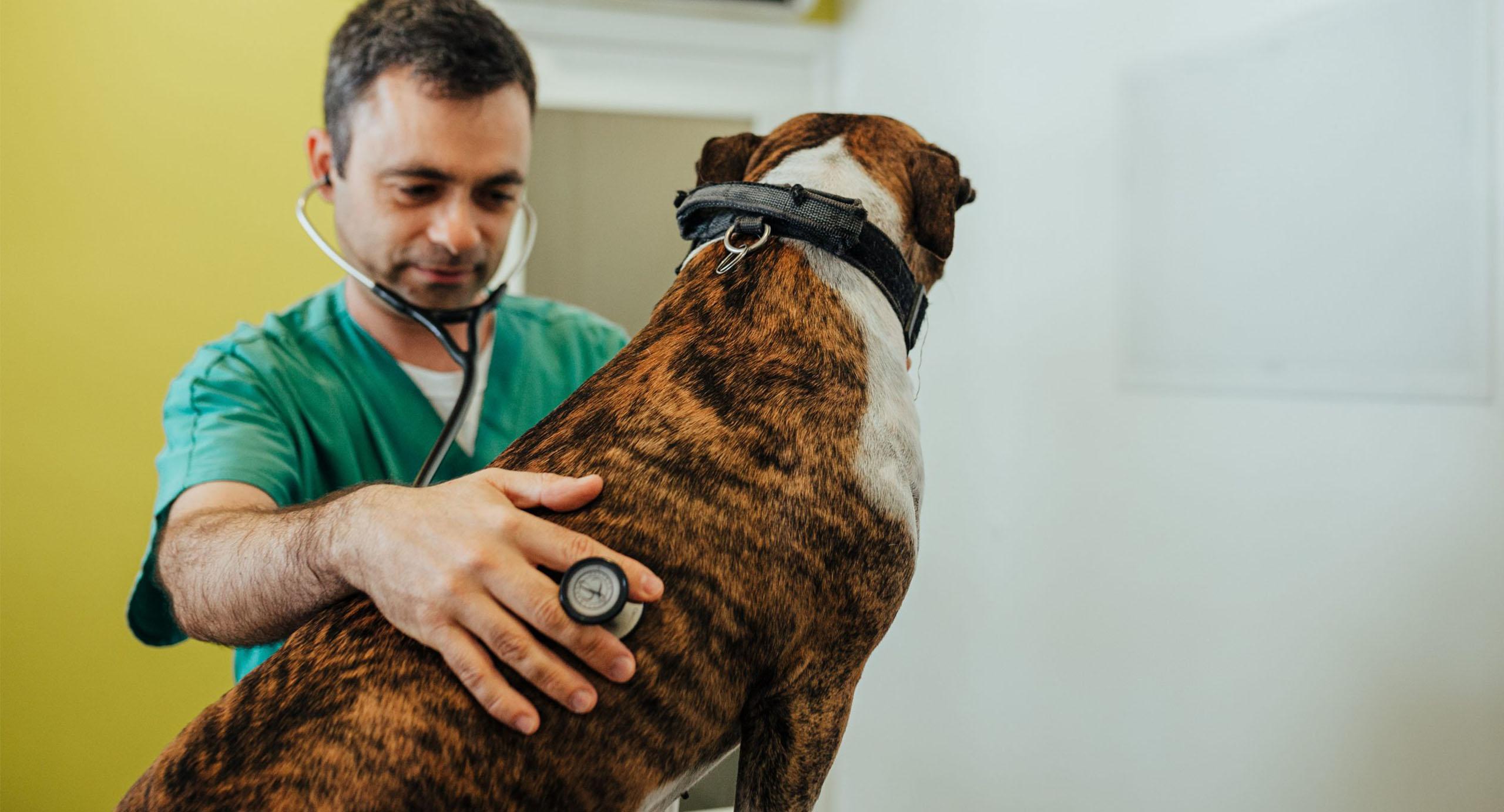 urgencias-veterinarias-oerias