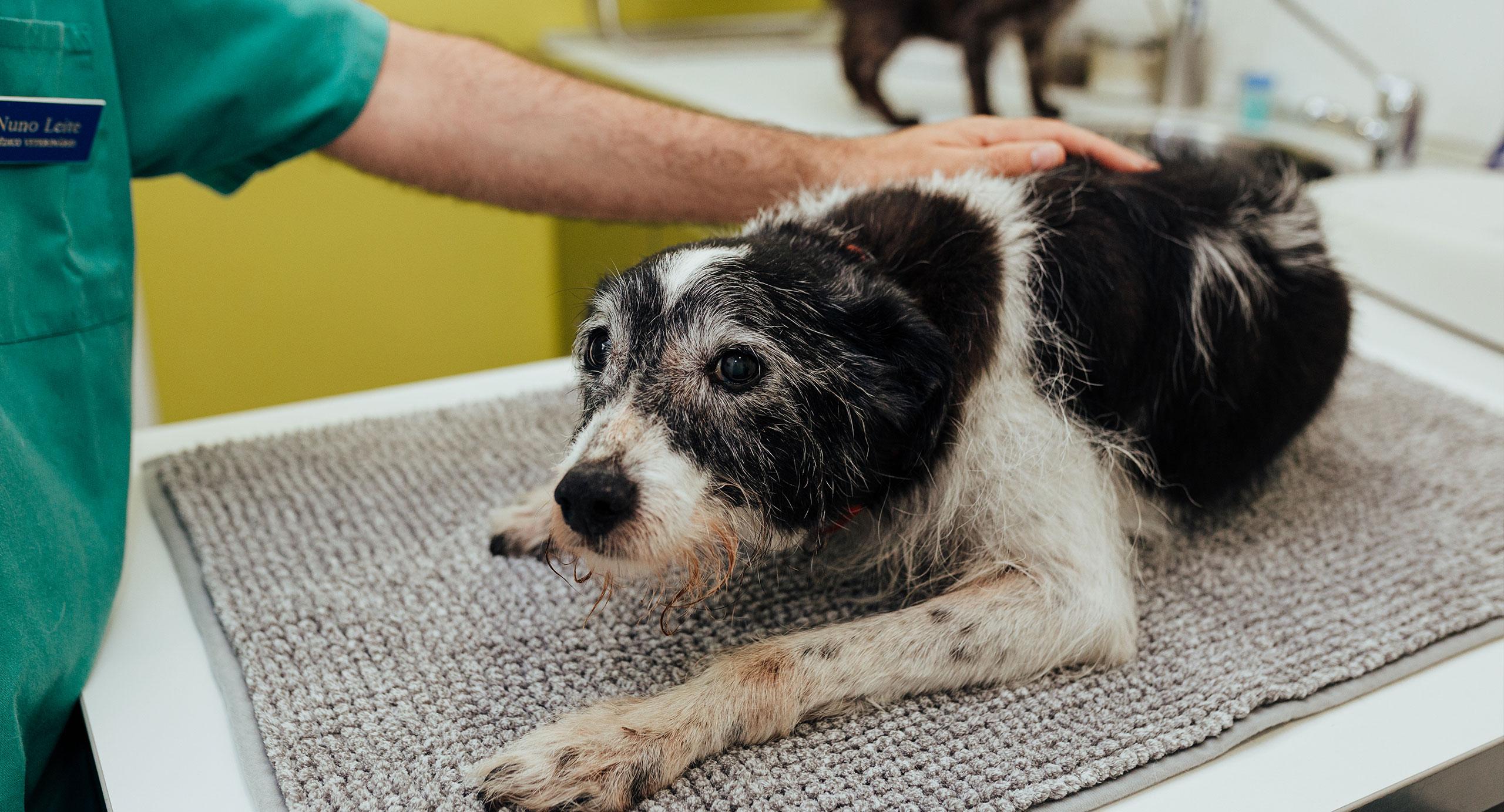 vetpoint-veterinario-oeiras