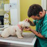 artigo veterinário sobre o que é dermatofitose