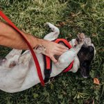 artigo veterinário sobre como evitar que cães ladrem em apartamentos