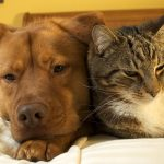 Doença renal cão e gato