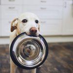 alimentação animal