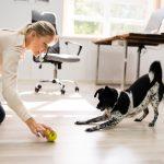 Brincadeiras para cães em casa