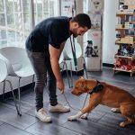 cães podem aprender truques em qualquer idade